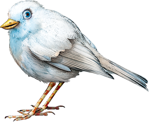 Oiseaux divers 9