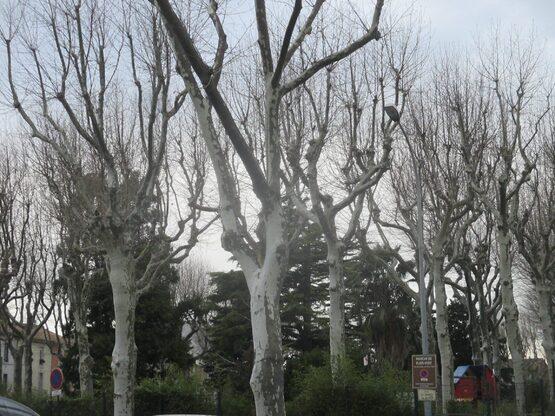 Et comment vont nos arbres préférés ?
