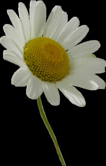 Tubes Fleurs diverses