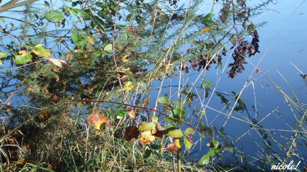 Flânerie au lac 2