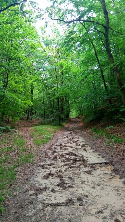 Promenade dans les bois ...