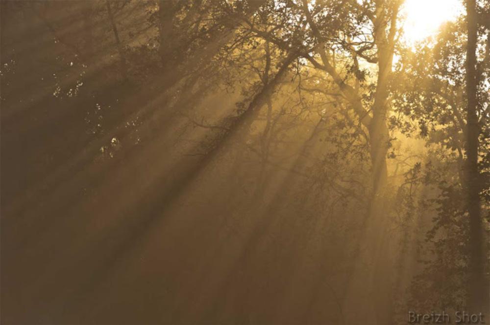 rais de soleil dans les chênes