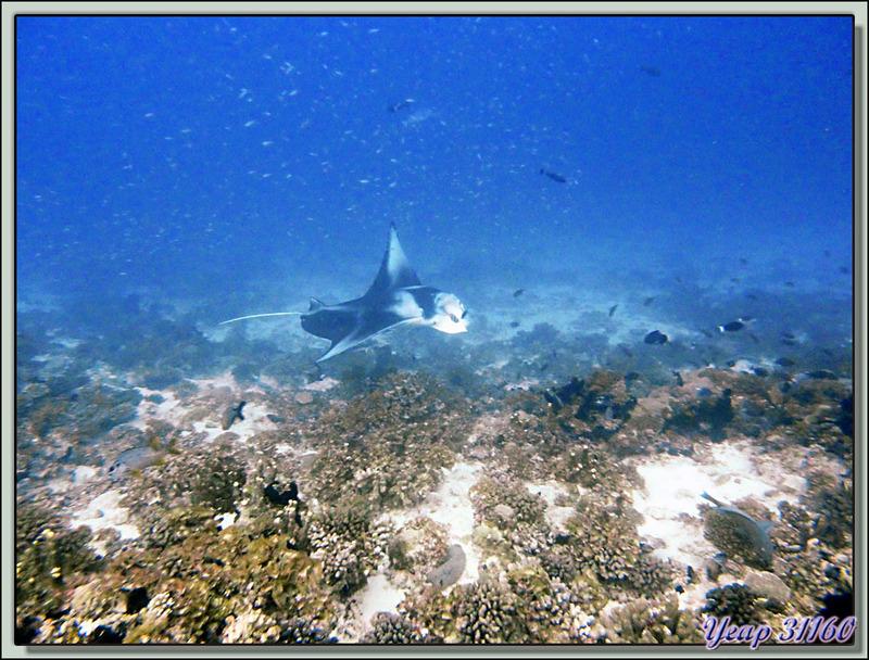 Images de Polynésie (2012) transférées depuis mon ancien blog