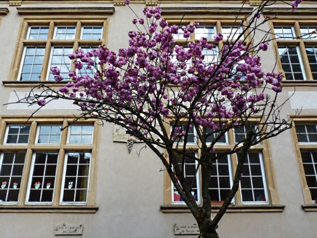 Hôtel de la Monnaie Metz 17 mp1357 2011