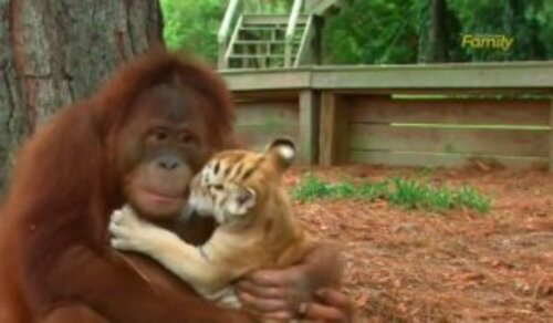 « Les animaux sont nos amis »