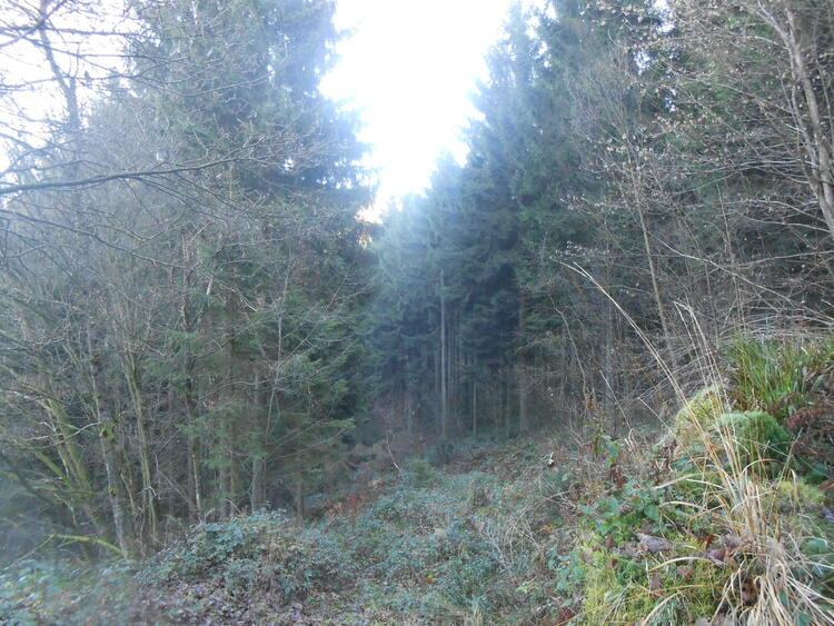 Ardennes-forêt des Heez-Manises