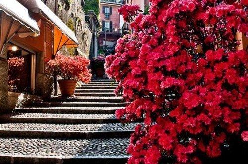 escalier-fleurs-1-500x331