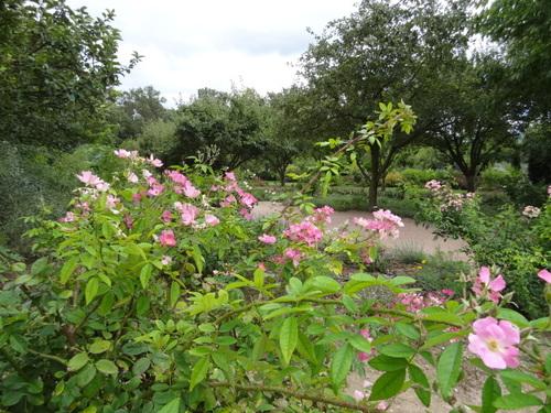 Jardin aux Plantes parfumées la Bouichère