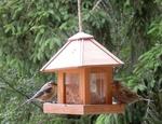 Artenvielfalt am Vogelhaus