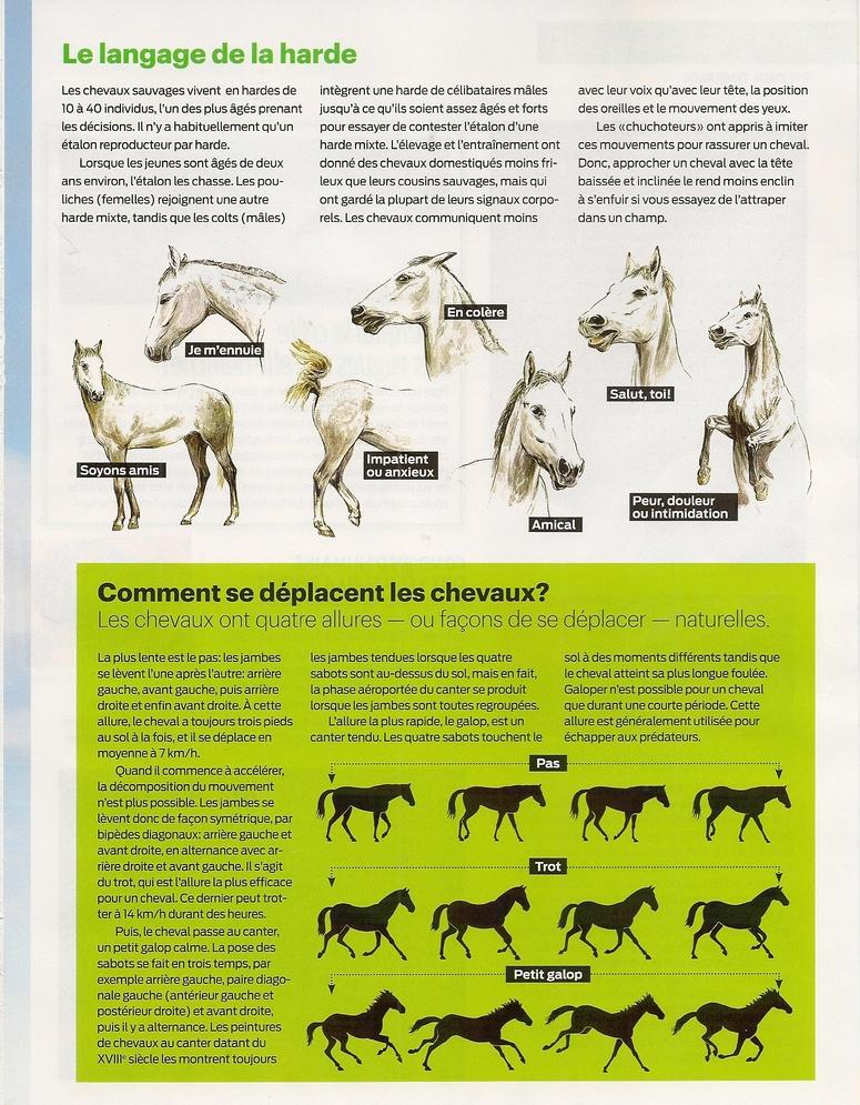Mammifères - 2:  Les chevaux (2 pages)