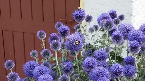 les jolies fleurs de ma marraine