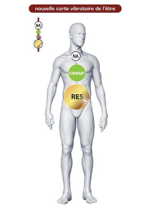 Le noyau atomique (NA)