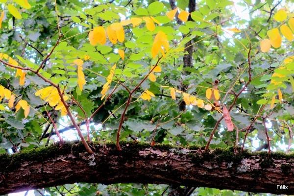 G03---Branche-et-feuilles.JPG