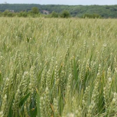 si les champs sont monnaie courante dans la région, il y a plein de merveilles à