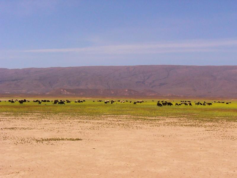 Mhamid-Foum - Tangarfa (piste et hors piste)