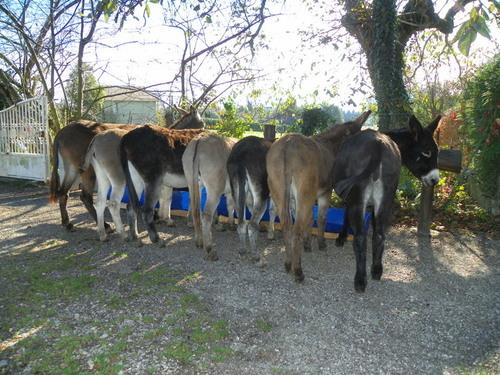 Un après-midi avec les ânes
