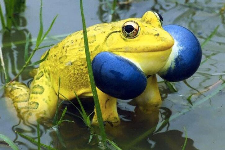 Amphibiens:  24 photos de grenouilles