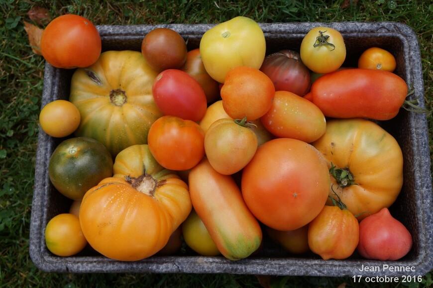 Récolte du 17 octobre 2016
