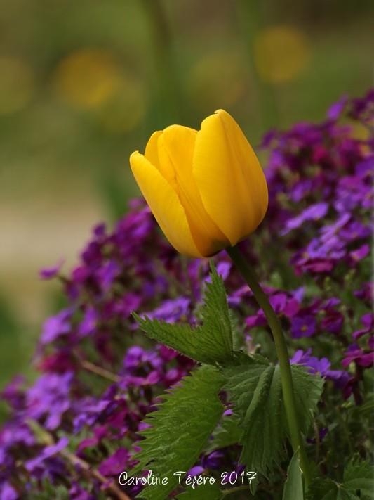 Quelques fleurs, pour vous
