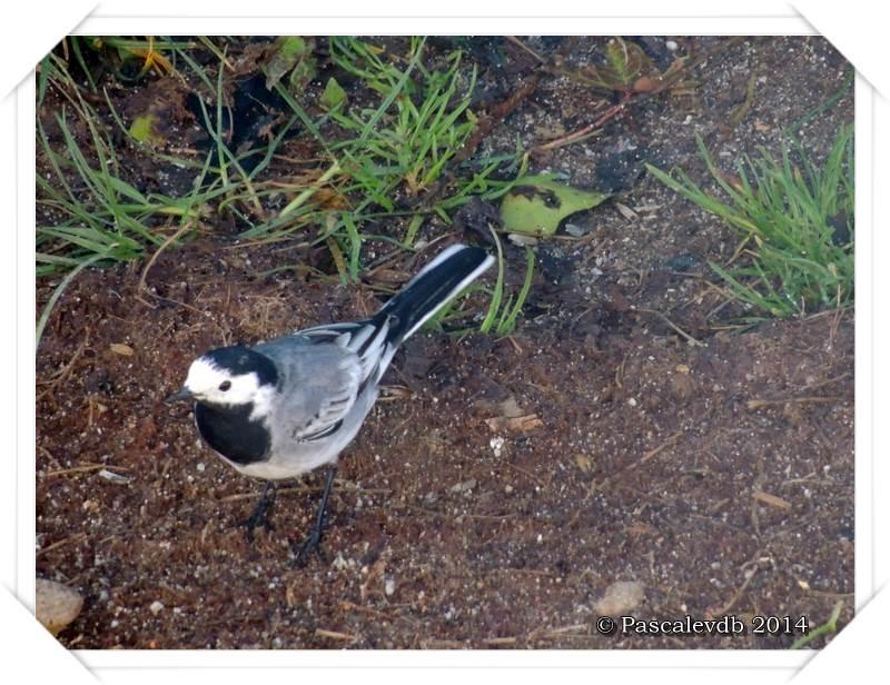 """Les oiseaux de """"mon"""" chemin - 8/9"""