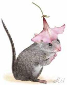 """Résultat de recherche d'images pour """"gif souris et cardinal"""""""