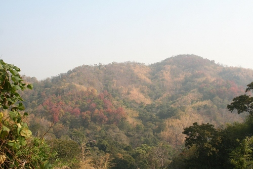 Lang Sang National Park
