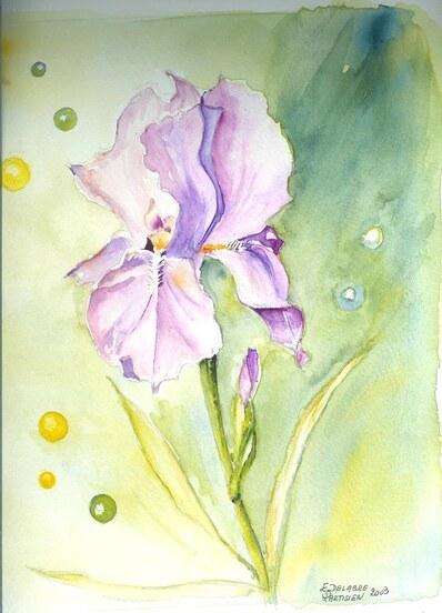 Iris ....