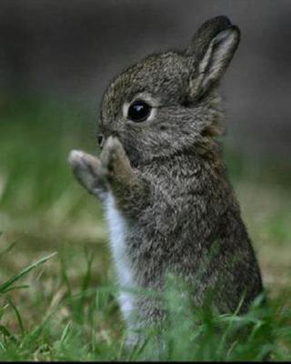 Le lapin de garenne adulte et b b roro74 - Cuisiner un lapin de garenne ...