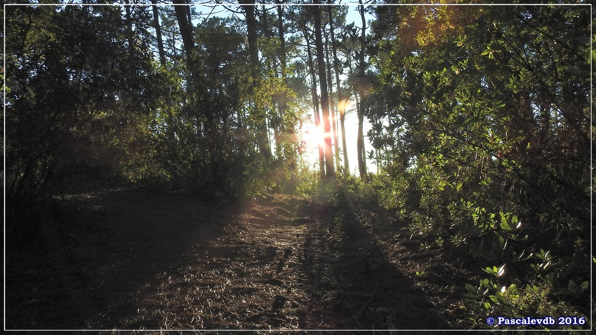 Éditer Supprimer Les Réservoirs de Piraillan - Octobre 2016 - 7/10