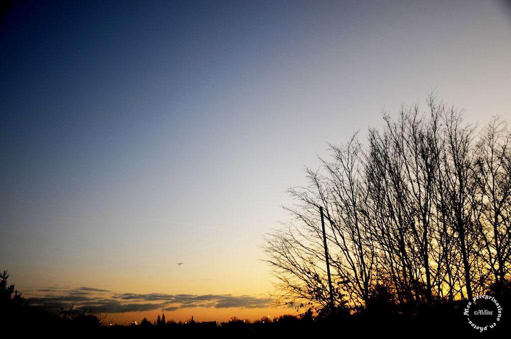 Le lever du jour au bout de mon jardin