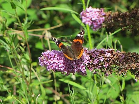 les-papillons-5485.JPG