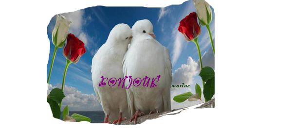 bonjour pigeon