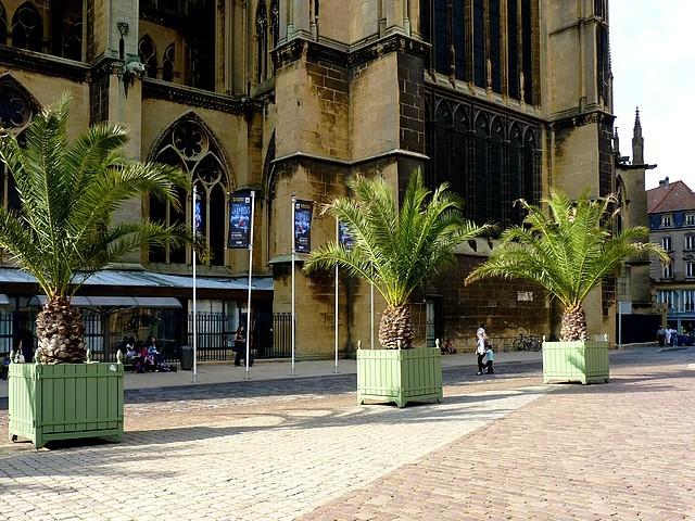 Les palmiers de Metz 4 Marc de Metz 15 09 2012