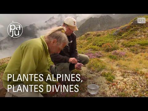 A la découverte du plus vieux jardin botanique du monde - YouTube