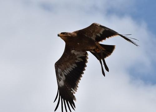... il vole plus haut...!