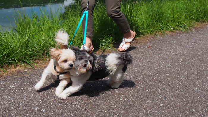 Djinnie et moi, le long du canal à Toul