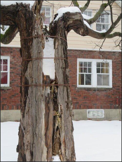 Un arbre bien apprécié.....