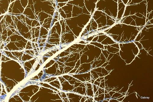 Branches récréatives!