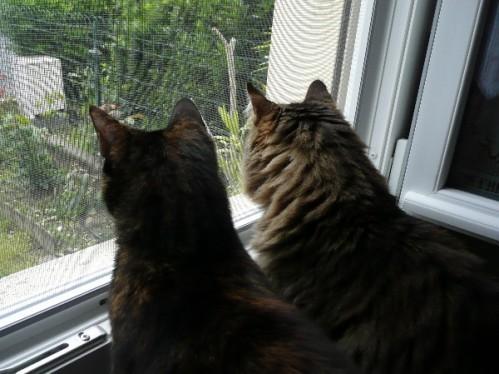 fenetre-moustiquaire-chat-3.JPG