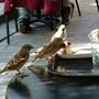 Lumière sur un plumage - Les piafs gourmands