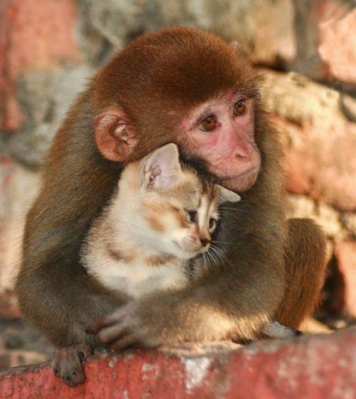 Brain Magazine - Page Pute - Chat + singe = l'amour et la violence: