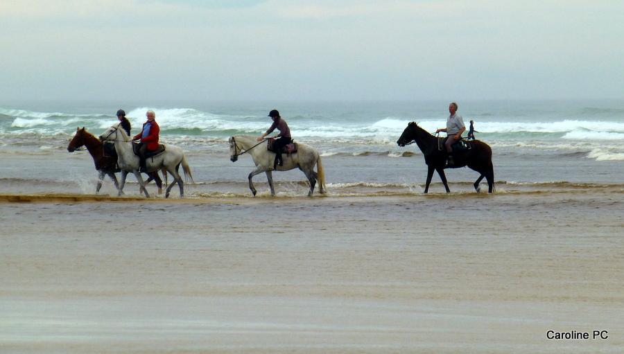 Balade à cheval  le soir sur la plage