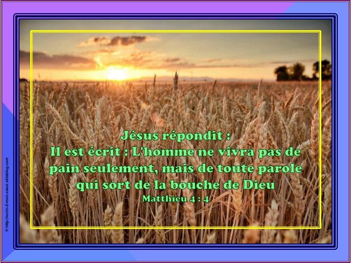 L'homme ne vivra pas de pain seulement - Matthieu 4 : 4