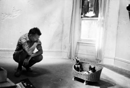 Les artistes et leur chat, suite