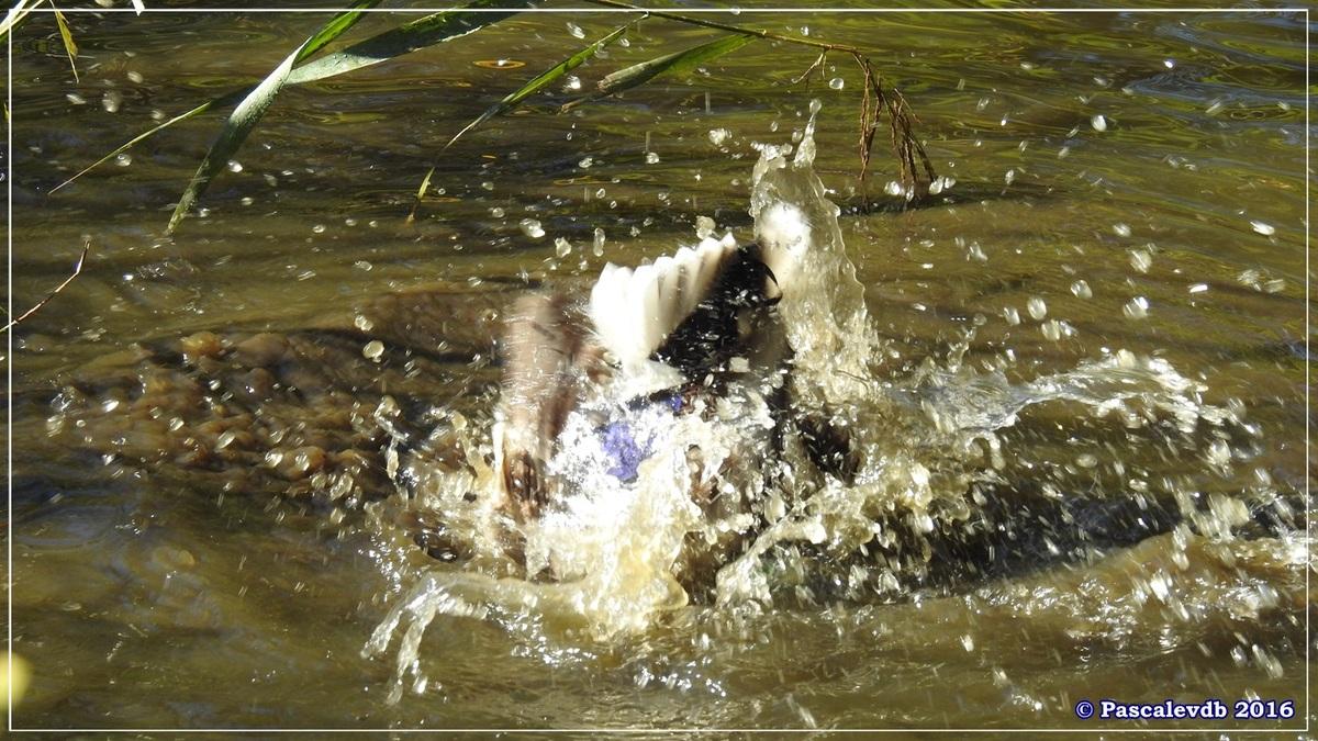 Réserve ornitho du Teich - Octobre 2016 - 1/11
