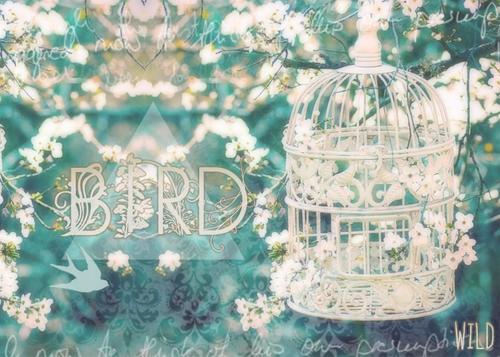Thème#2 Bird