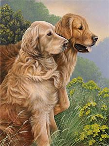 Les Goldens en peinture et dessin suite....