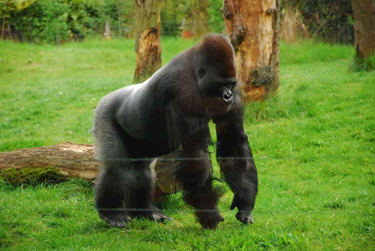 Un pensionnaire très impressionnant du Zoo.