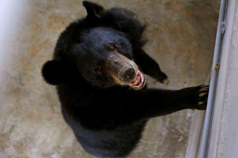 Dans sa cuisine, une vieille dame survit à l'attaque d'un ours