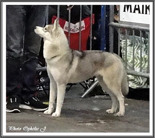 Iaska Exposition canine de Toulouse (23 février 2014)